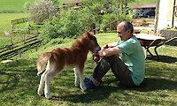 Tiere auf dem Bauernhof im Bayerischen Wald
