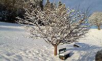 Winterferien im Bayerischen Wald